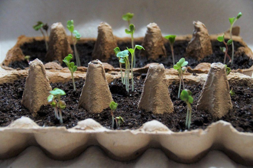 plantar semillas con niños encerrados
